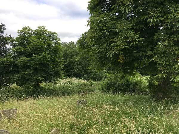 Pound Lane woodland